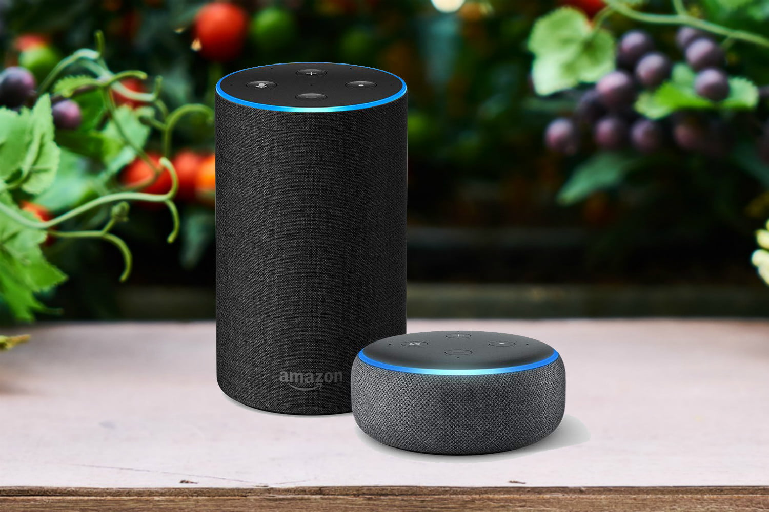 Round Amazon Echo and Echo Dot in the test